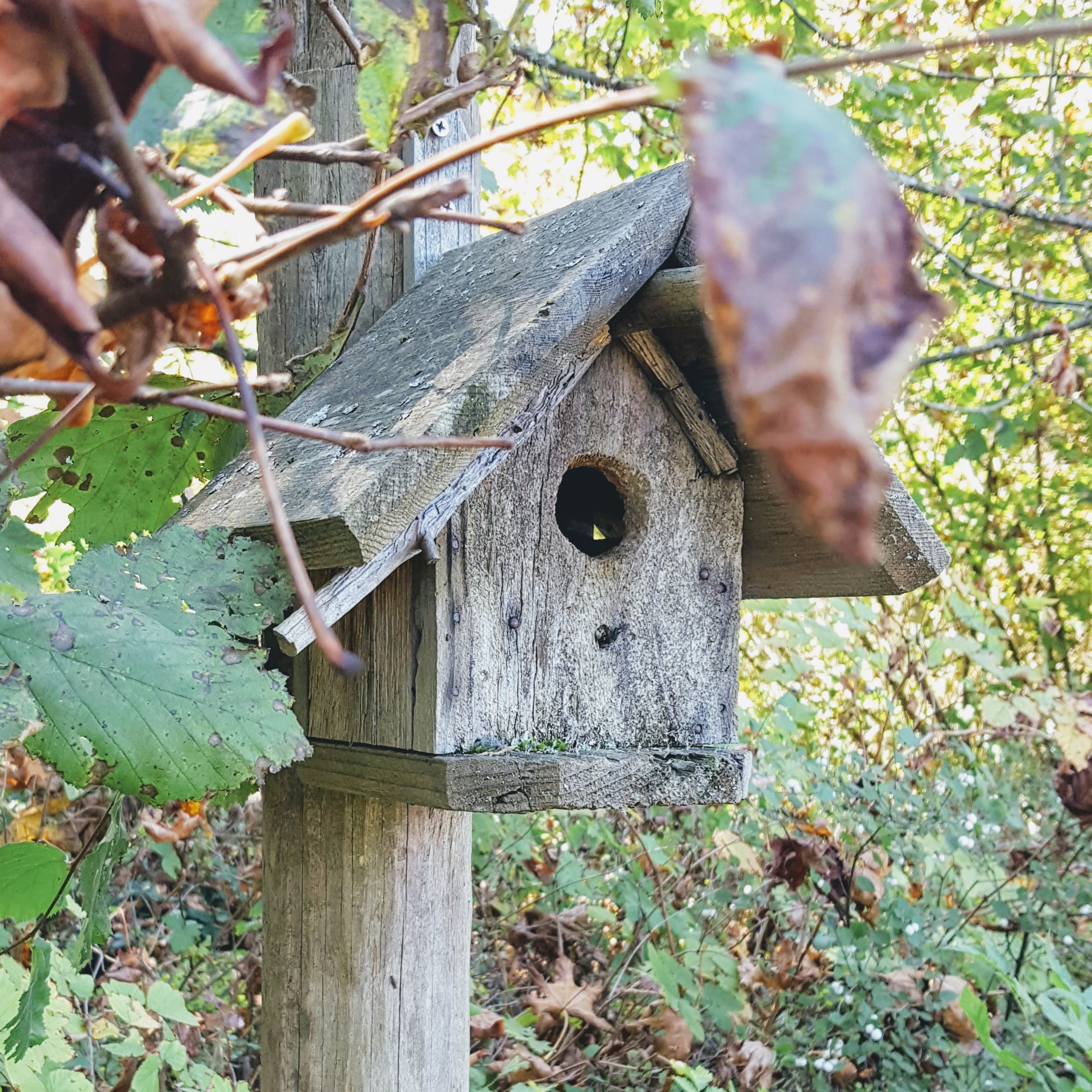 Poetic birdhouse