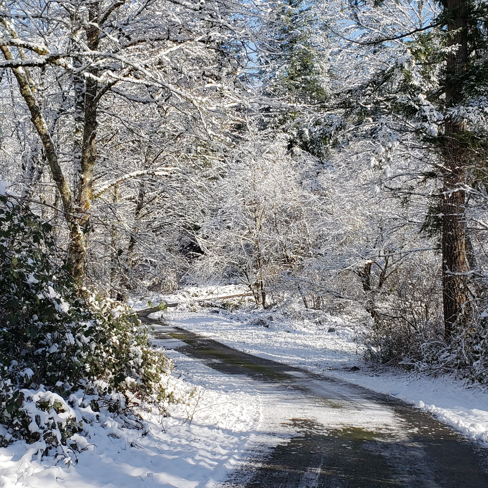 Image of a country road in winter
